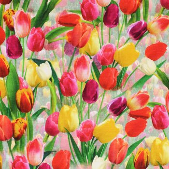 DUTCH TULIPS ... Digidruck